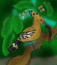 Удоды - яркие птицы с интересным поведением | 228x200